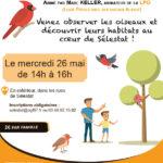 """Atelier parents-enfants """" Les oiseaux à Sélestat"""""""